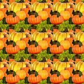 Pumpkin Patch 7