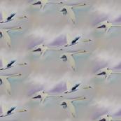 swansflying