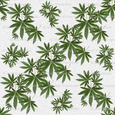 Stony Indica Leaf