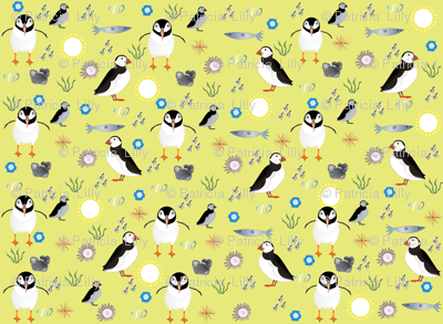 Puffin Birds on a Sunny Day