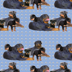 Rottweiler Family Group