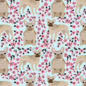 French Bulldog fawn coat cherry blossom fabric