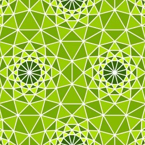06165142 : SC3 V shard : spiny succulent