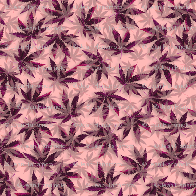 Purple Indica Dream