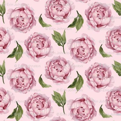 Peony Rose on Pink
