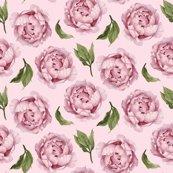 Rrpinkpeony_pinkbackground_shop_thumb