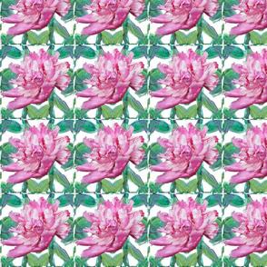 Pink_Peony_Hedge_bkg_merge_5x5in_150dpi_1