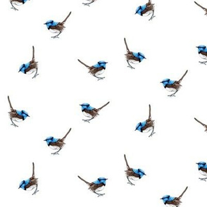 Tiny Blue Wrens on White
