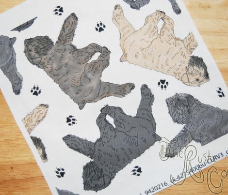 Trotting Bouvier des Flandres and paw prints B - white