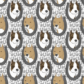 American Staffordshire Terrier horseshoe portraits B