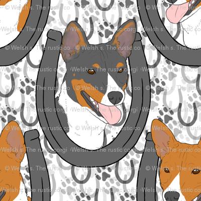 Basenji horseshoe portraits