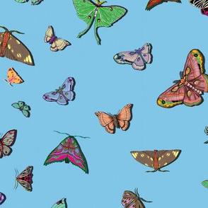 Moths Sky Blue