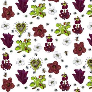 Insectivorous plants on white - medium