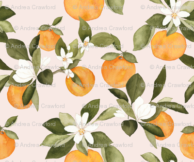 Orange blossom on pink