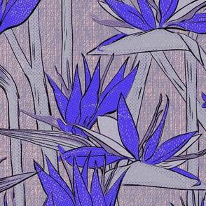 Strelitzia clear blue