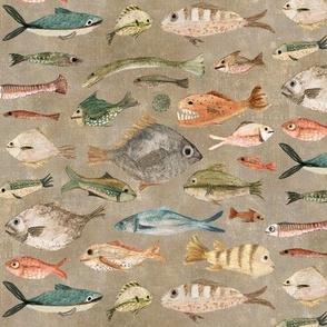 fish in fawn