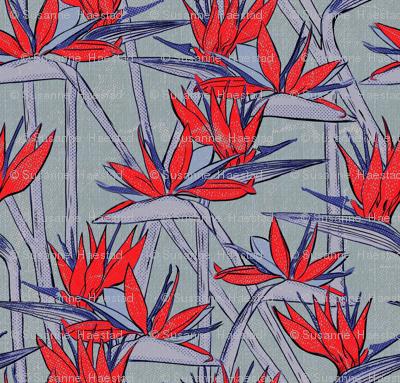 Strelitzia texture red