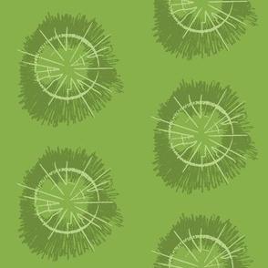 Tree circles_greenery17_pales