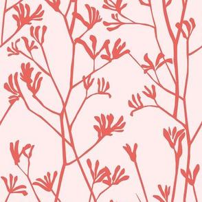 Pink and Coral kangaroo paw