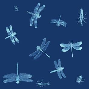 Dragonflies Indigo Blue