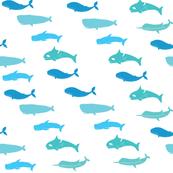 whale01