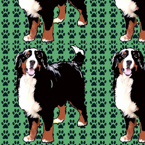 bernese_green_