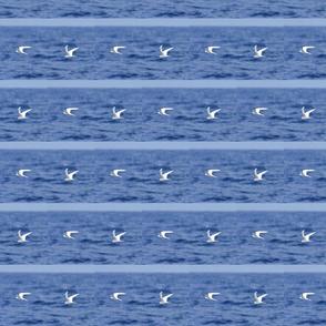 Fairy Tern Dot Stripe-ed
