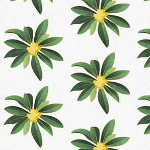 Loquat medlar flower