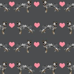 Australian Cattle Dog love hearts