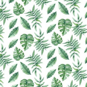 Tropical Leaves Palm Leaf Frawn Banana Water Color on White