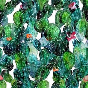 Cactus green wall