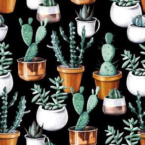 Cactus pots black