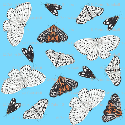Moth Pattern with Blue Background