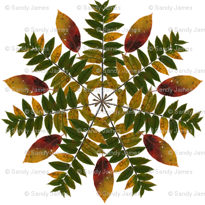 walnut_and_persimmon_mandala_3