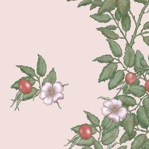 Climbing rosehips_Pink
