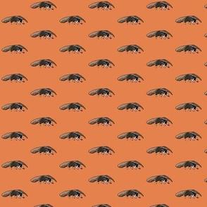 Anteater Orange