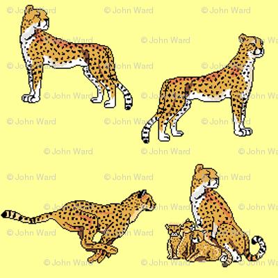 Cheetahs Yellow