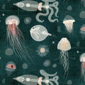 Jellyfish of the deep