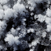 Snow Crystals 2
