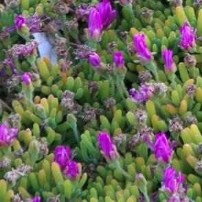 Big Sur Flowers 18x18