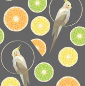 Citrus cockatiel