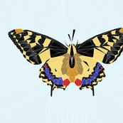Rpeacock_butterfly_geodesic_shop_thumb