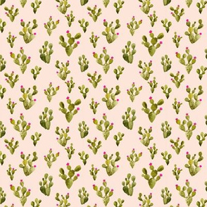 Mini Prickly Pear Blush with Pink Flowers
