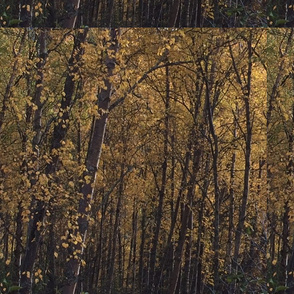 Alaskan Walk In The Woods