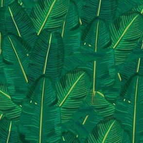 Banana Leaf Canopy