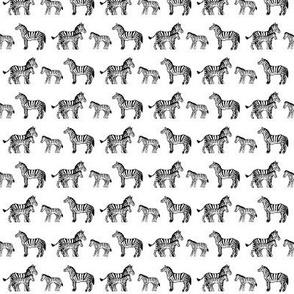 Zebra Family White