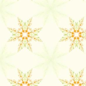 Orange marmalade stars