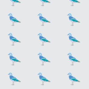 Seagull Blue