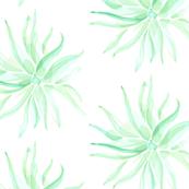 Watercolor Succulent Jade Southwest Floral Botanical_Miss Chiff Designs