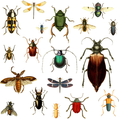 BUGS COLLECTION / VINTAGE / WHITE fabric by shopcabin on Spoonflower - custom fabric
